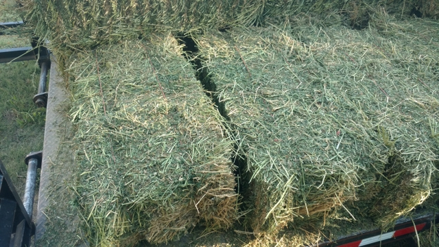 Small square alfalfa for sale