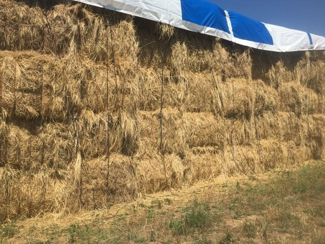 Teff grass 3×4 and round bales