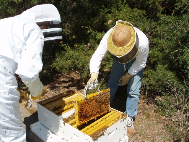 Need Bees? Honeybee packages available – April